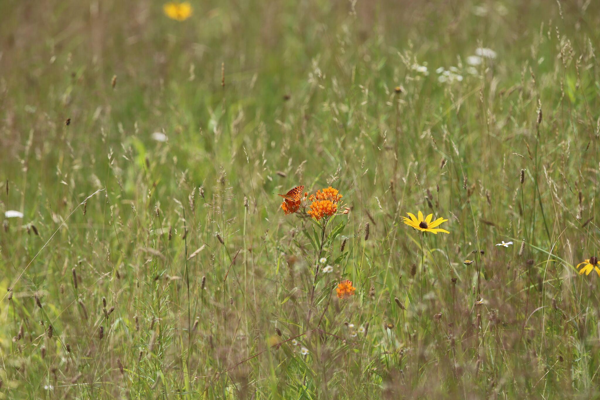 Grassland Restoration Presentation