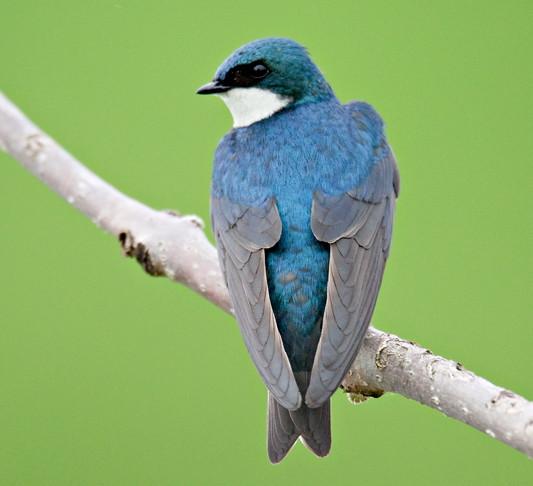 Bird Walk