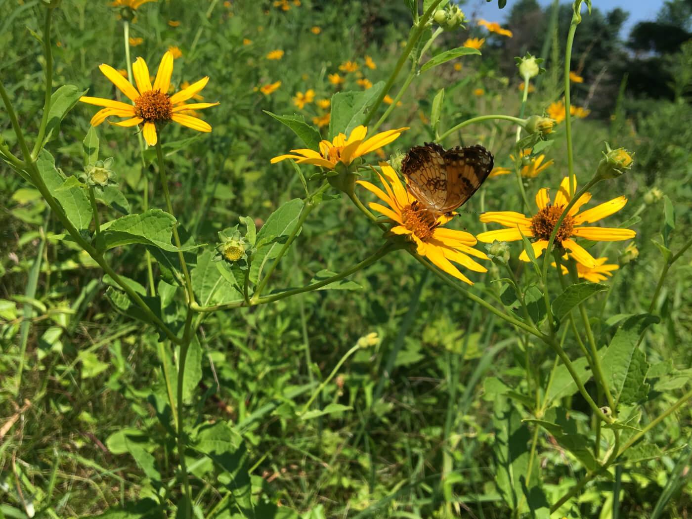 Butterfly ID Workshop