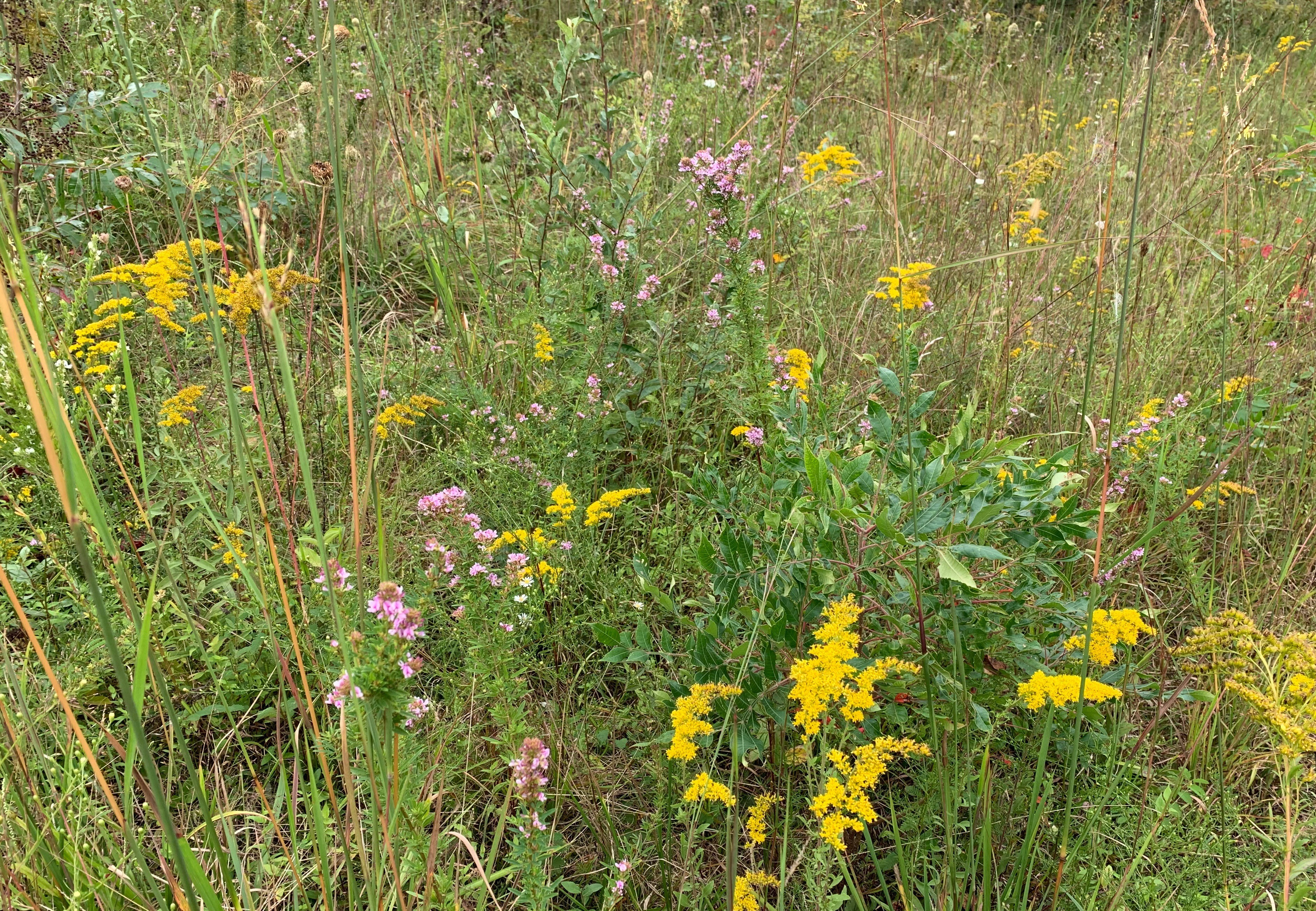 EVENT FULL *Restoration of a Grassland Ecosystem: Lessons Learned with Dr. Douglas Gill* EVENT FULL